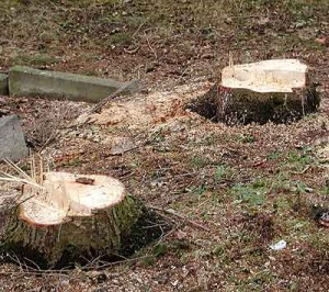Baumstumpf in der Pfortenstraße